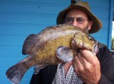 Estuary Cod at Lake Tyers 2011